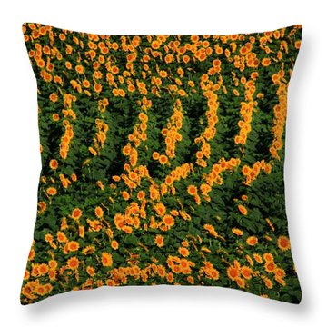 Throw Pillow featuring the photograph All In A Row by Chris Berry