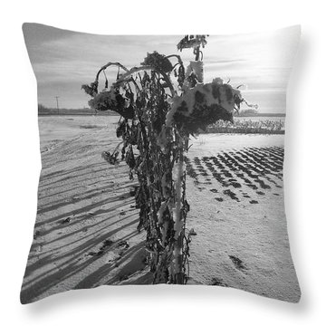 All In A Row Throw Pillow by Mary Mikawoz