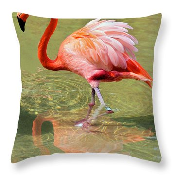 All Ruffled Up Throw Pillow