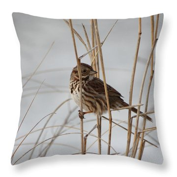 All Things Great And Small Throw Pillow