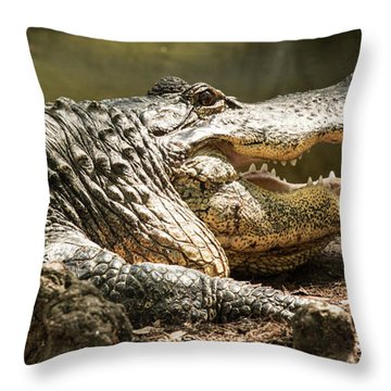 Throw Pillow featuring the photograph Alligator At Lowry Park Zoo by Richard Goldman
