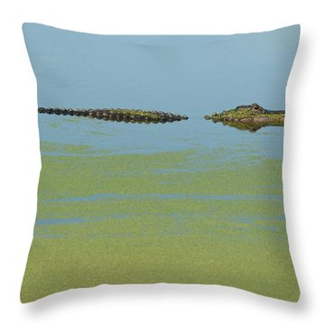 Alligator  Throw Pillow by Carolyn Dalessandro