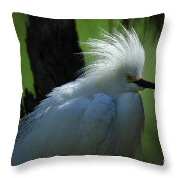 Throw Pillow featuring the photograph Alligator Farm Snowy Egret by Deborah Benoit