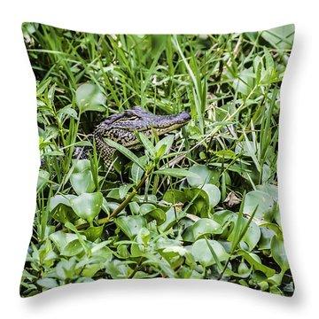 Alligator In Duck Weed, Louisiana Throw Pillow