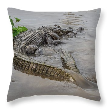 Alligators Courting Throw Pillow