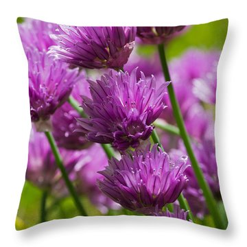 Allium Blooms Throw Pillow