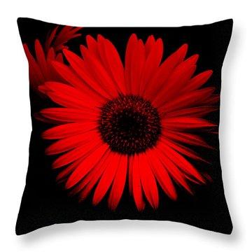 Alluring Gerbera Throw Pillow