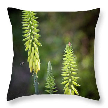 Throw Pillow featuring the photograph Aloe Vera Blooms by Adam Romanowicz