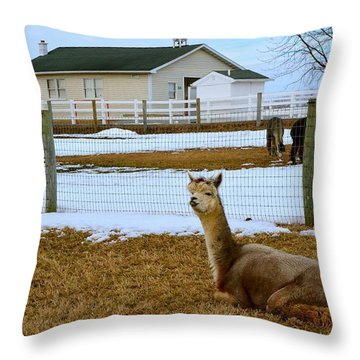 Alpaca And Amish Schoolhouse In Winter Throw Pillow