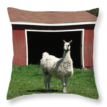 Throw Pillow featuring the photograph Alpaca And Red Shed by William Selander