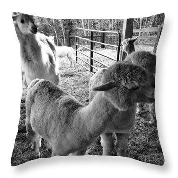 Alpaca Meeting  Throw Pillow