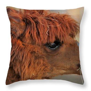 Alpaca Portrait Throw Pillow