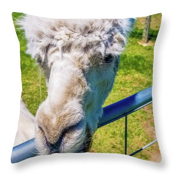 Alpaca Yeah Throw Pillow