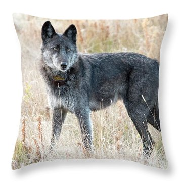 Alpha Female Throw Pillow