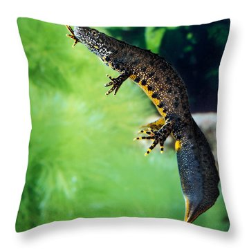 Alpine Newt Triturus Alpestris Throw Pillow by Gerard Lacz