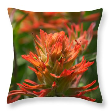 Alpine Wildflower - Indian Paintbrush Throw Pillow by Aaron Spong