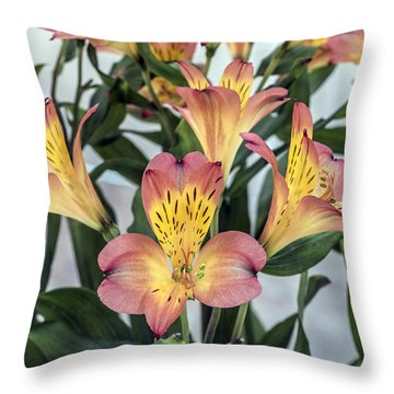 Alstroemeria Blossoms Throw Pillow