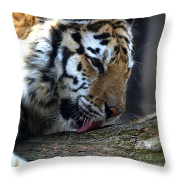 Always A Cat Throw Pillow by Karol Livote