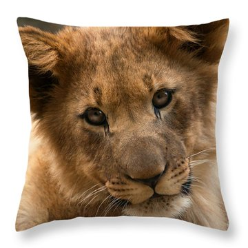 Throw Pillow featuring the photograph Am I Cute? by Christine Sponchia