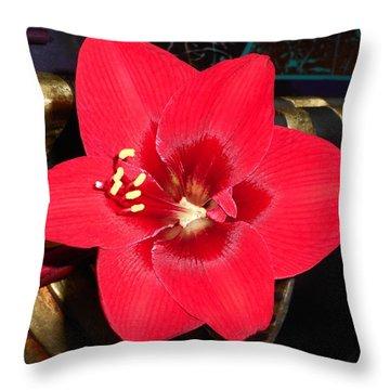 Amaryllis 4 Throw Pillow