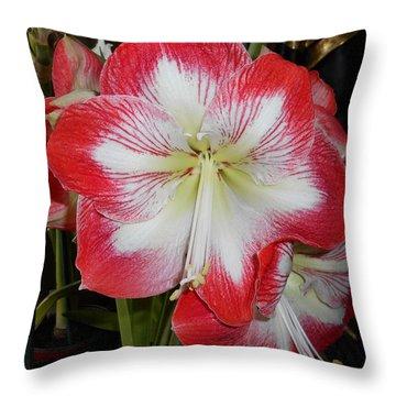 Amaryllis 5 Throw Pillow