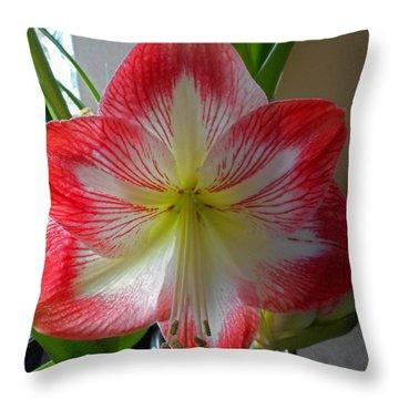 Amaryllis 6 Throw Pillow