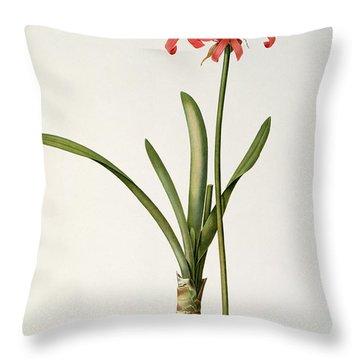 Amaryllis Curvifolia Throw Pillow by Pierre Redoute