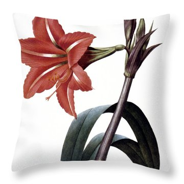 Amaryllis Throw Pillow by Granger