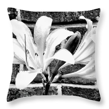 Amaryllis Inspiration Throw Pillow