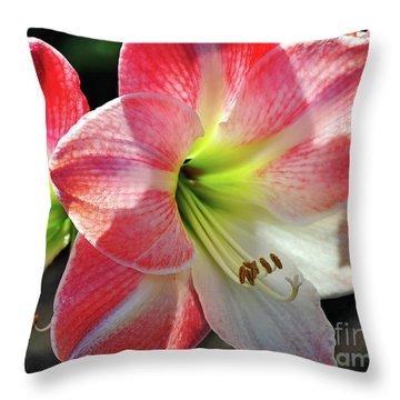 Amaryllis Throw Pillow by Kaye Menner