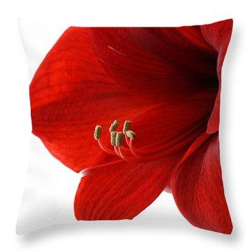 Amaryllis On White 3 Throw Pillow