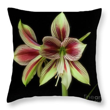 Amaryllis 'papilio Improved' Throw Pillow