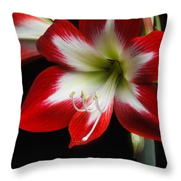 Amaryllis 'quito' Throw Pillow