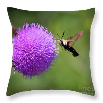 Throw Pillow featuring the photograph Amazing Insects - Hummingbird Moth by Kerri Farley