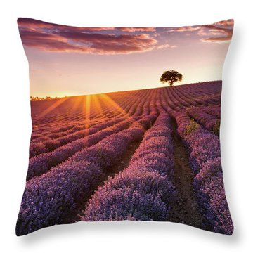 Amazing Lavender Field At Sunset Throw Pillow by Evgeni Dinev
