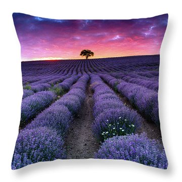 Amazing Lavender Field With A Tree Throw Pillow by Evgeni Dinev