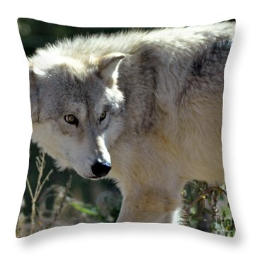 Amber Eyes Throw Pillow