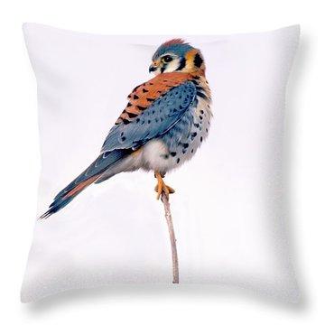 Amercian Kestrel Throw Pillow