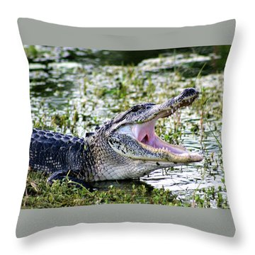 American Alligator Florida 3314_2 Throw Pillow