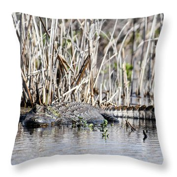 Throw Pillow featuring the photograph American Alligator by Gary Wightman