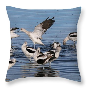 American Avocet's Taking A Break Throw Pillow