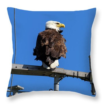 American Bald Eagle On Communication Tower Throw Pillow by David Gn