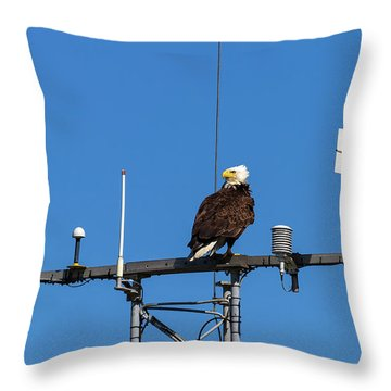 American Bald Eagle Perched On Communication Tower Throw Pillow by David Gn