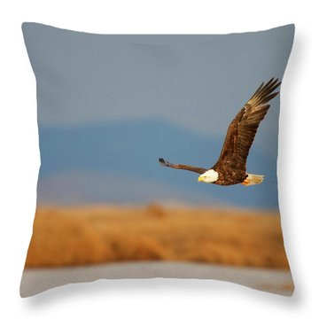 Throw Pillow featuring the photograph American Bald Eagle by Ram Vasudev