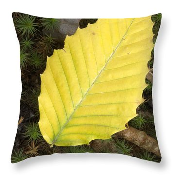 American Beech Leaf Throw Pillow by Erin Paul Donovan