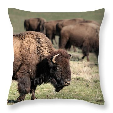 American Bison 5 Throw Pillow