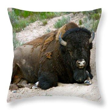 American Bison Throw Pillow by Karon Melillo DeVega