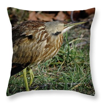 Throw Pillow featuring the photograph American Bittern by Douglas Stucky