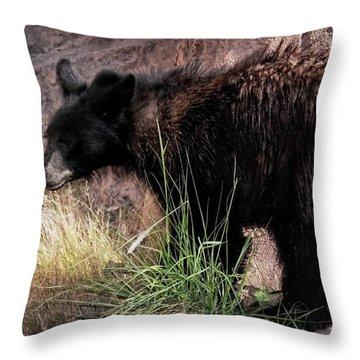 American Black Bear Cub Throw Pillow by Elaine Malott