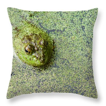 American Bullfrog Throw Pillow
